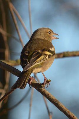 Ptaki (76)
