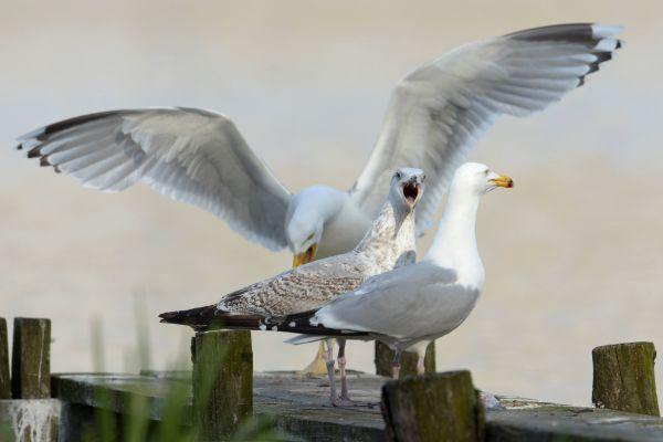 Ptaki (83)
