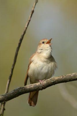 Ptaki (73)